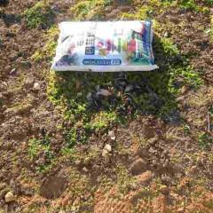 株の周りの雑草を綺麗に除草します