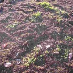 ふかふかの土の布団で春までゆっくりお休みください