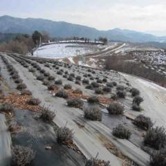農場の所々にはまだ雪が残っています