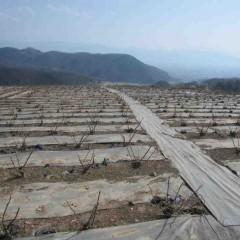ナード事務局前のローズは芽が動き始めましたが農場はまだ動きがありません