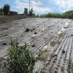 ナード・ジャパンの農場では毎年こうして代々受け継いでいます