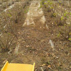 除草した草から土を払って片付けます