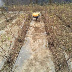 通路の土は畑に戻します