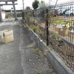 フェンスの外に伸ばした枝