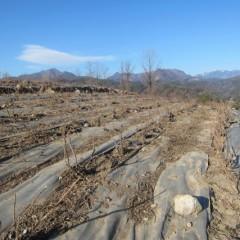剪定した枝を運び出した畑