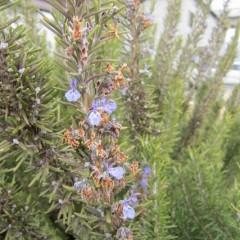 真冬でも花を咲かせる枝もあります
