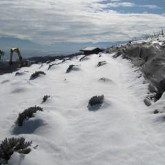 グロッソ&スーパーの畑はまだ雪に覆われて「かまくら」状態