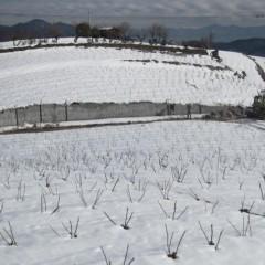 見渡す限りの雪野原
