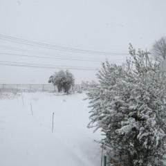 14日、またしても雪が!