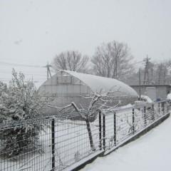 8日に降った雪が残ったままの畑に更に降り積もります