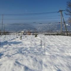 記録的大雪から一週間、畑はまだ雪の中です