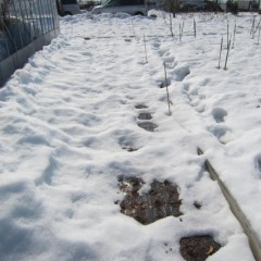 25日、記録的な大雪も徐々に溶け始めています