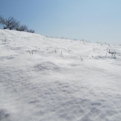 農場のローズ畑にはまだ雪がいっぱい