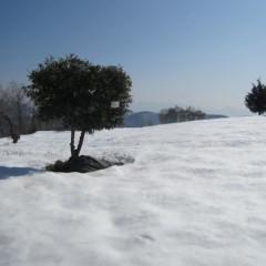 農場はまだ雪に覆われています