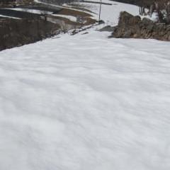 日当たりの良いカモマイル・ジャーマン畑もまだ雪融けしていません