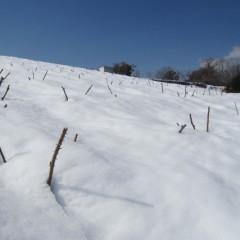日当たりの悪い斜面は40~50cmの雪が残っています