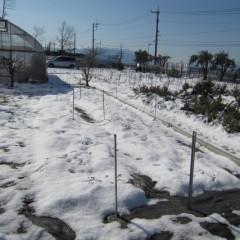 5日に雪が降り7日になってもまだ溶けていません
