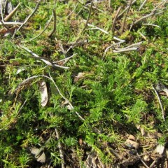 新緑が芽に眩しいです