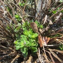 枯れ枝の中からは新芽がちゃんと出ていました
