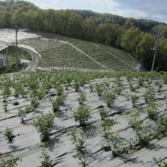 農場全体が緑に覆われています