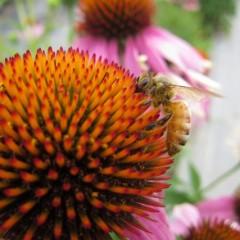 ハチさんも大忙し
