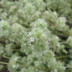 可憐な小さな白い花です