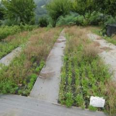気温と水分が雑草の成長には好条件