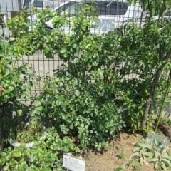 フェンスの裏側も枝や花柄でいっぱい