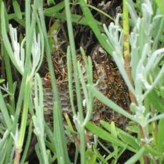 ハチが巣を作っていました
