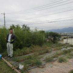 ティートゥリーの収穫が始まりました
