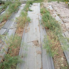 収穫した後の畑