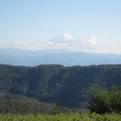 今日は富士山の冠雪が綺麗に見えました