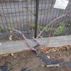枝の更新完了
