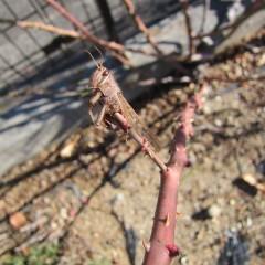尖った枝先にモズの早煮えを発見
