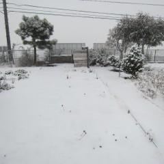 朝から降り出した雪はあっという間に銀世界に変えてしまいました