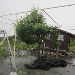 風を受ける面積の大きい日除けネットを取り外しました