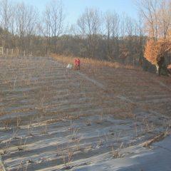 こちらのローズ畑でも剪定作業は続いています