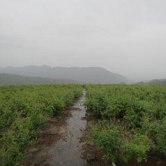 午後になって雨が降り始めました