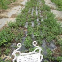 カラカラの畑には夕立や通り雨でも貴重な水分です