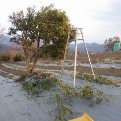 伸びすぎた枝を剪定しました