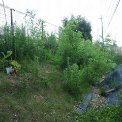 農場の雑草にばかり気を取られていたら事務局の周りがジャングルの様になってしまいました