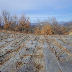 綺麗に片付けられたローズ畑