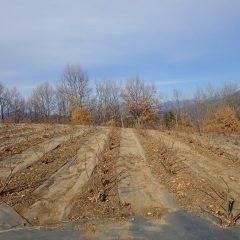 剪定後の点検と清掃が終わったローズ畑