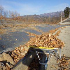 落ち葉を廃棄