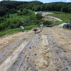 取った草を片付けるまでが除草作業です