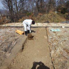 ユーカリ・レモン畑の土壌改良作業