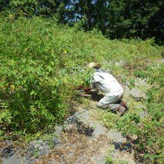 一日中畑に這いつくばって汗まみれになりながら除草しています