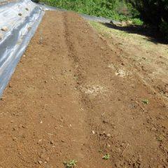 手作業だけで綺麗に整備された畑です