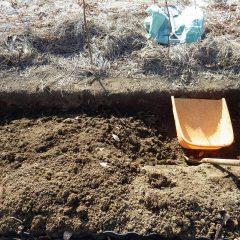 ふかふかになった土壌