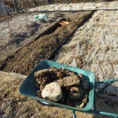 土の中から出て来た石を畑の外へ運び出します